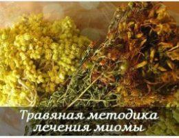 Миниатюра к статье Травяная методика лечения миомы